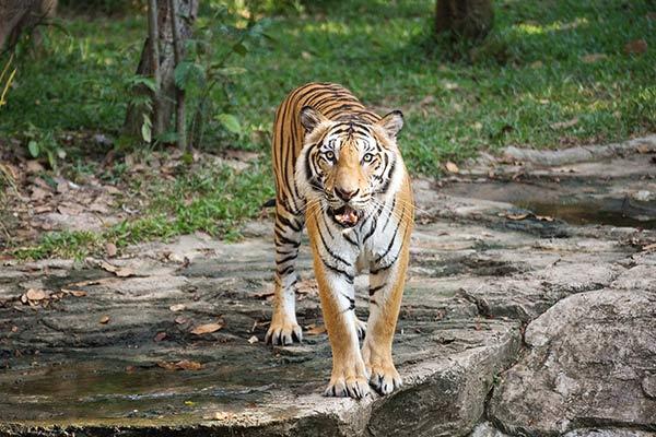 Turpentine Creek Wildlife Refuge in Arkansas